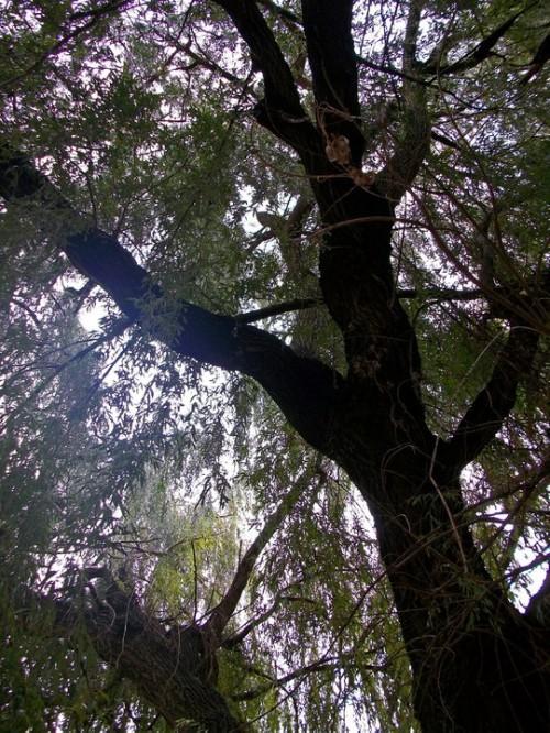 """""""Отнася се за голямото дърво в двора на градината..."""""""